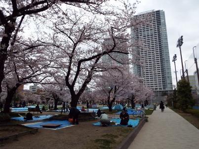 kinshi_sakura (20).jpg
