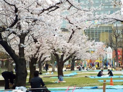 kinshi_sakura (4).jpg