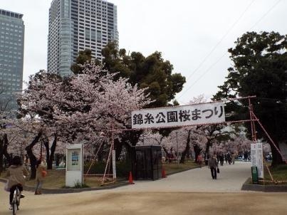 kinshi_sakura (1).jpg