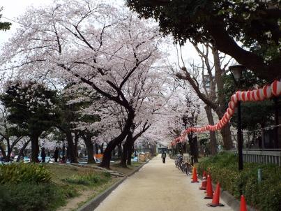kinshi_sakura (2).jpg