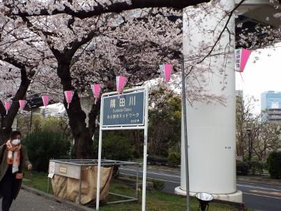 sumida_sakura (1).jpg