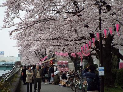 sumida_sakura (10).jpg