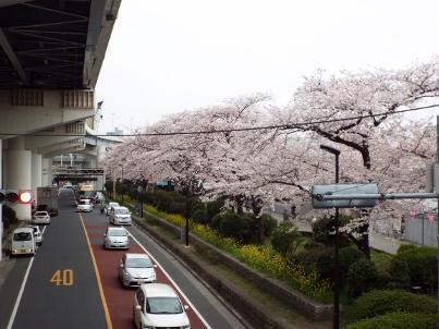 sumida_sakura (11).jpg