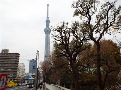 sumida_sakura (13).jpg