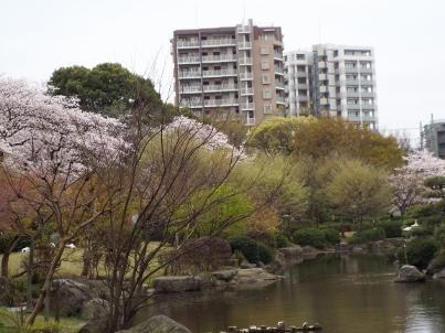 sumida_sakura (17).jpg