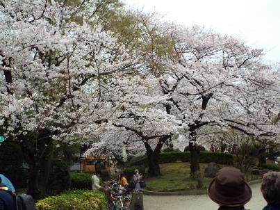 sumida_sakura (19).jpg