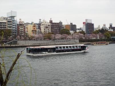 sumida_sakura (2).jpg