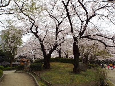 sumida_sakura (21).jpg