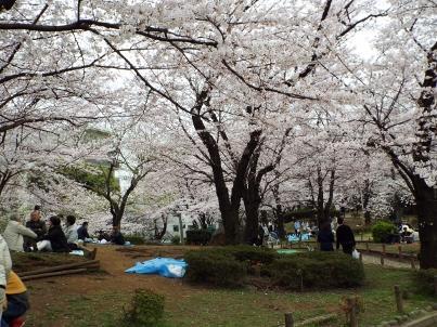 sumida_sakura (23).jpg
