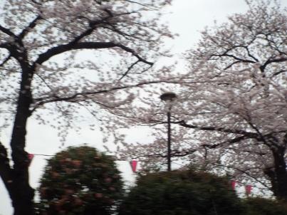 sumida_sakura (38).jpg