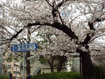 sumida_sakura (40).jpg