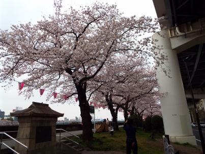 sumida_sakura (8).jpg