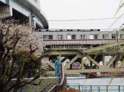 sumida_sakura (9).jpg